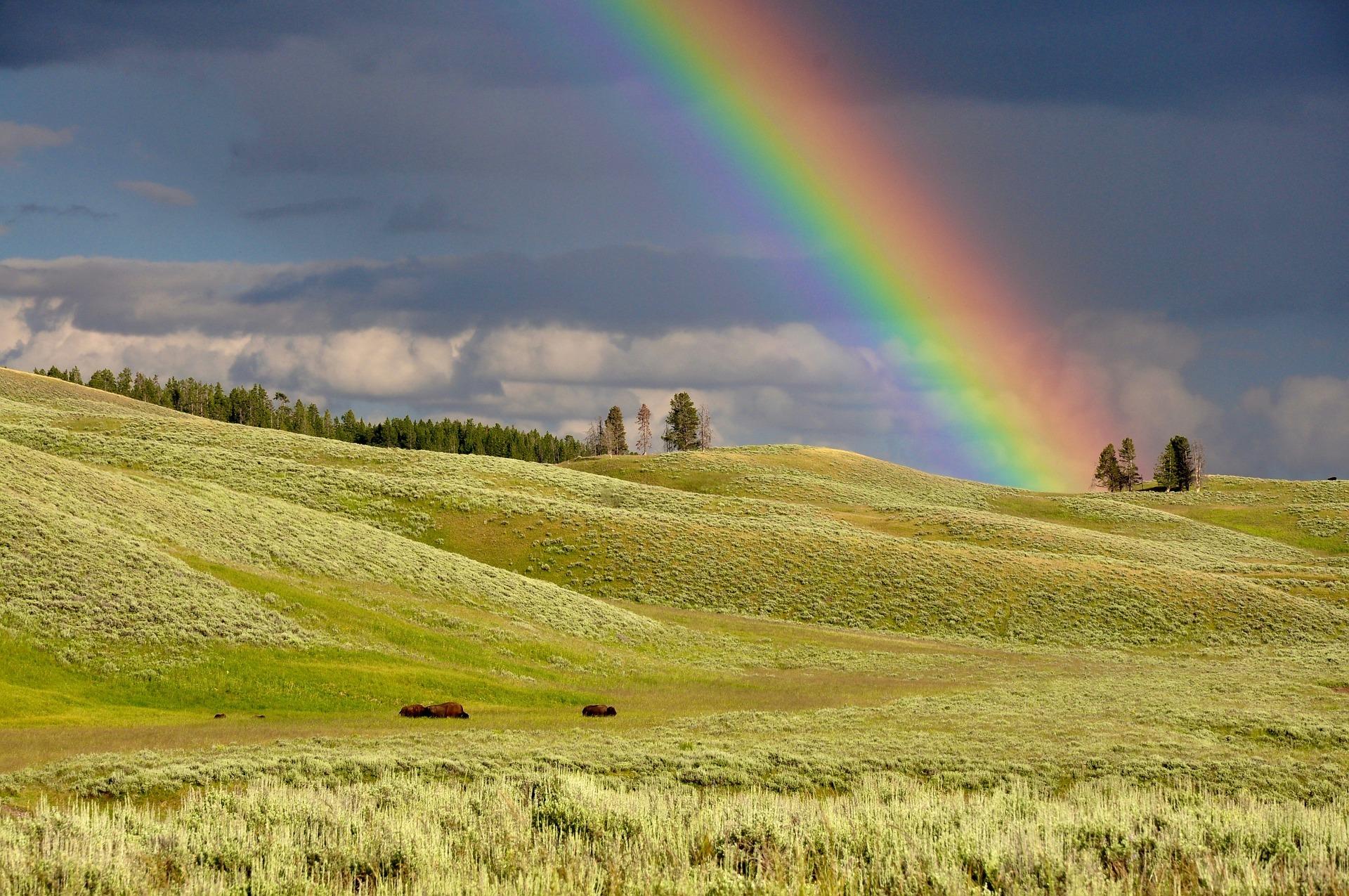 Bring ein bisschen Regenbogen rein