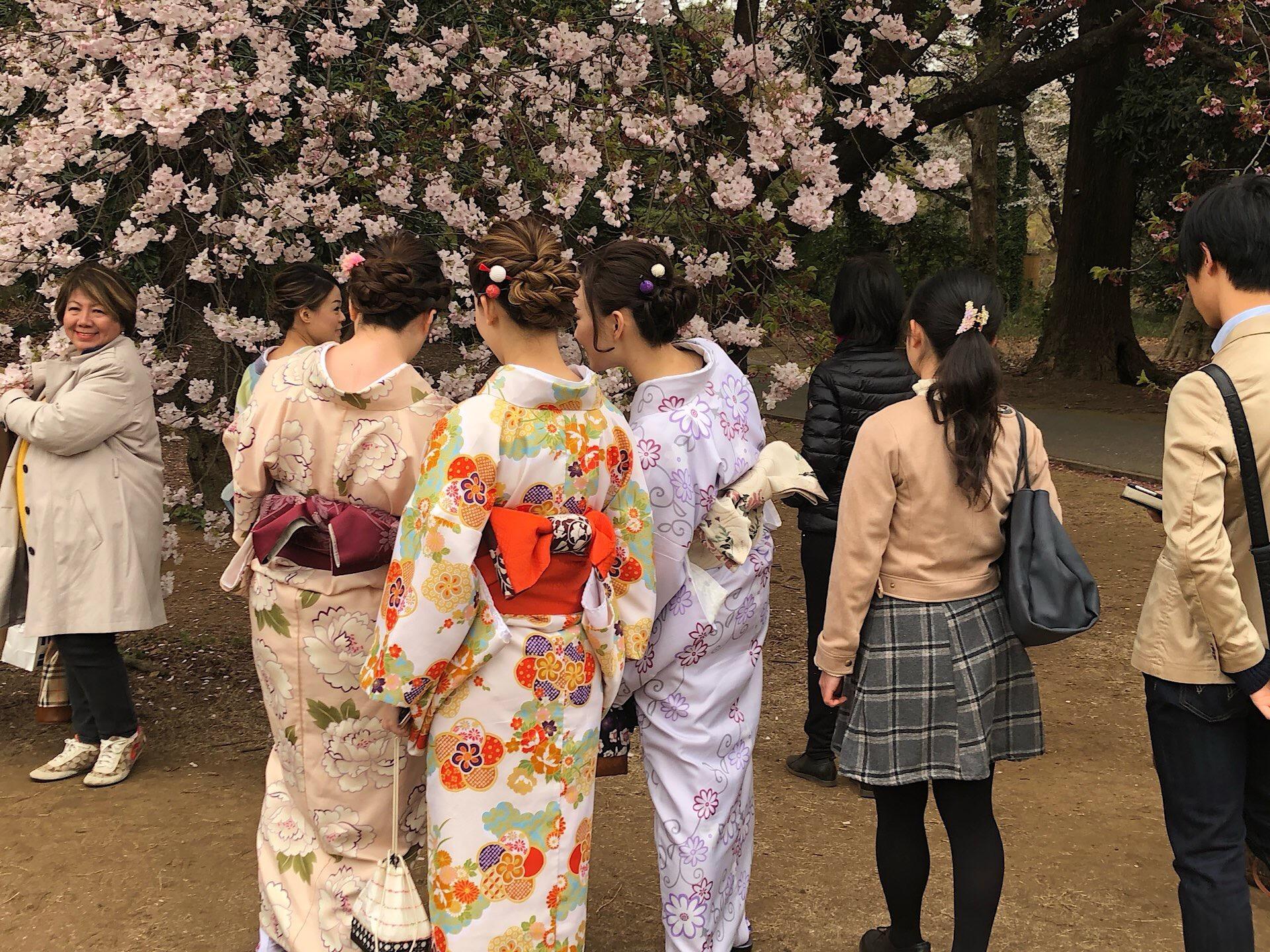 Sakura – rosarote Kirschblütenekstase in Tokyo
