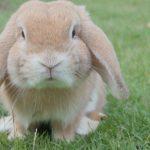 Wie wichtig ist dein Blog (zu Ostern)?