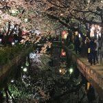 Der Moment! Kirschblüte in Kyōto