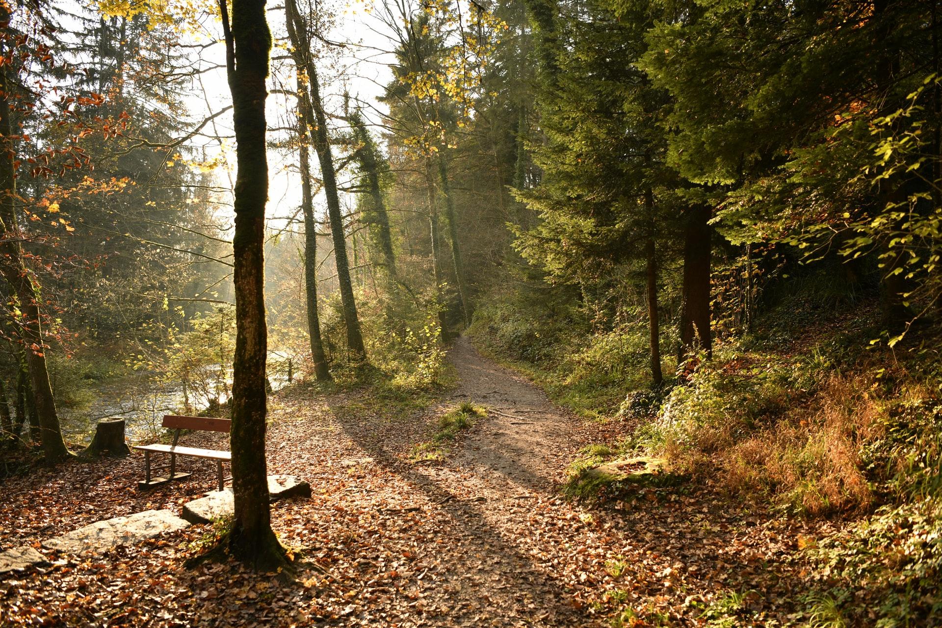 Der Herbst ist da oder Zeit für einen Rückblick?